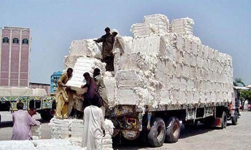 Cotton trading slows down