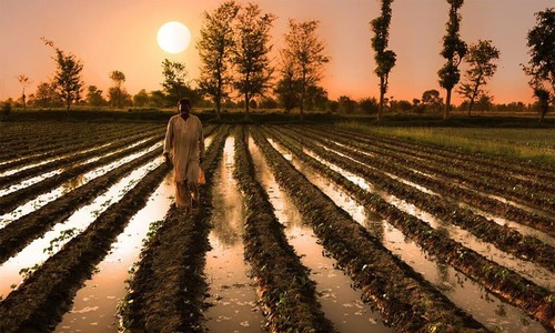 Climate change blamed for Pakistan's steep drop in cotton production