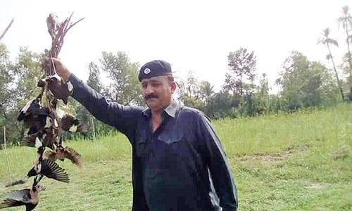 Wildlife dept seizes over 100 birds in Lakki, Bannu