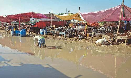 Muddy conditions pose threat of disease outbreak at cattle market