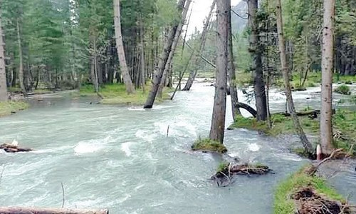 Change in course of river poses threat to deodar forest