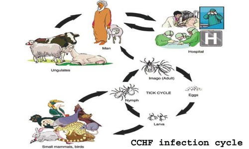 Story Times: What you need to know about the Congo virus