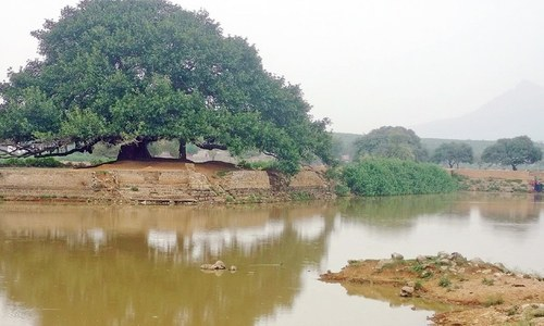 Once the heart of a Potohari village, local ponds are drying up