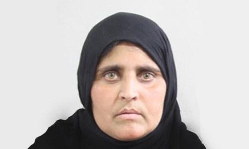 Nat Geo's famed 'Afghan Girl' Sharbat Bibi arrested by FIA in Peshawar