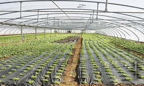 Tunnel farming gains ground