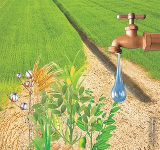 Water shortage likely to hit Sindh crops