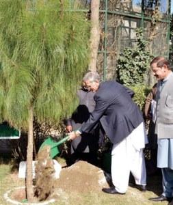 Billion Tree Tsunami project increases forest cover: CM