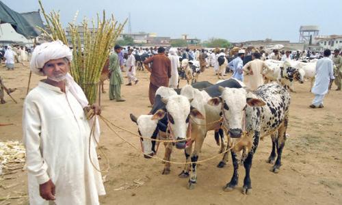 Promising developments in livestock sector