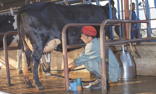 Spilt milk: The woes of dairy farmers