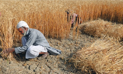 Govt to spend Rs225bn on wheat procurement