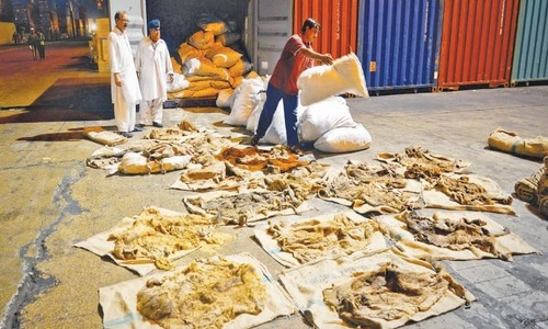 Seven held for 'illegal' trade of over 4,700 donkey hides