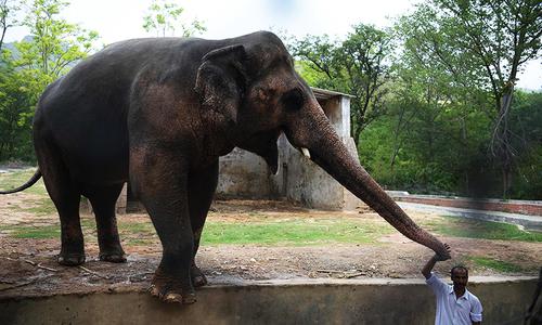Zoo celebrates Suzi's 34th birthday