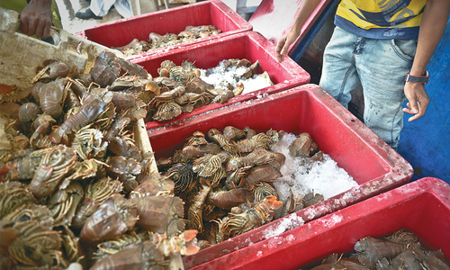 Chinese enjoy seafood from Pakistan transported over new trade routes