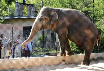 There is still time to save Kavaan, the lone elephant