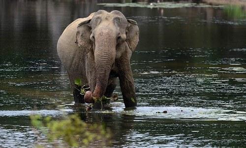 Sri Lanka eyes elephant menace at stadium