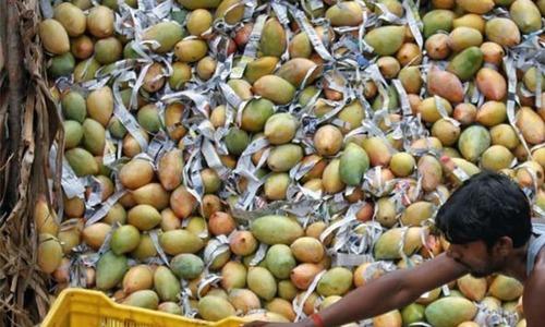 Exploring mangoes as a metaphor in South Asian writing