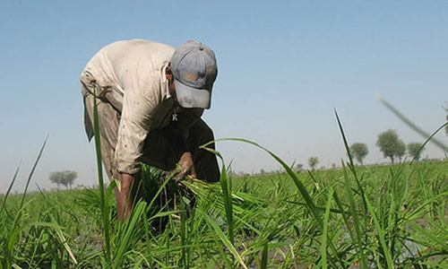 Pakistan needs latest farm-tech to achieve food security