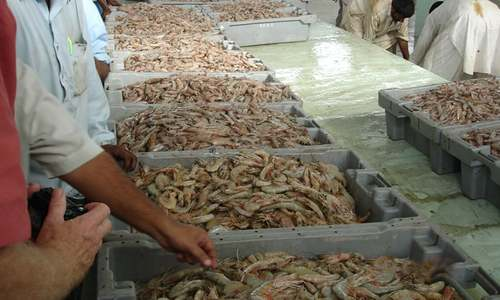 Fish exports up by 21pc
