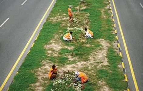 FIA begins investigation into alleged corruption in tree plantation campaign