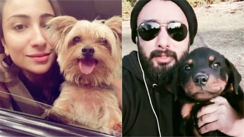 11 pets of Pakistani celebrities we can't get enough of