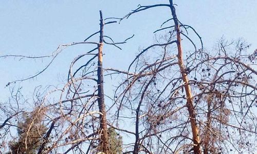 The tragic deaths in Balochistan — this time, of trees