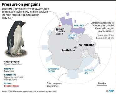 Starvation claims lives of thousands of penguins