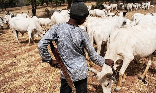 At least 30 killed in farmer-herder violence in Nigeria: police