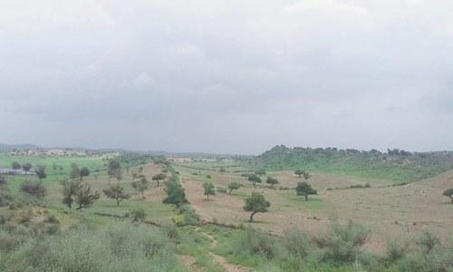 Travel: When Thar Desert goes green