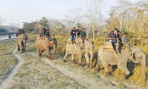 Ban on elephant safari will kill operators' business in Nepal