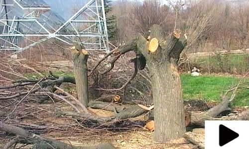ٹرانسمیشن لائن گزارنے کی خاطر سیکڑوں نایاب درخت کاٹ دیے گئے