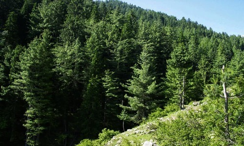Opposition contests KP govt's tree plantation claims