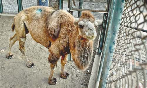 Zoo animals suffer because of staff shortage, poor sanitation