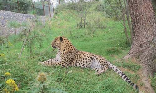 Illegal trade in wildlife rife across Pakistan, says study