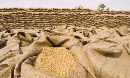 Subsidy, price recovery boost wheat exports