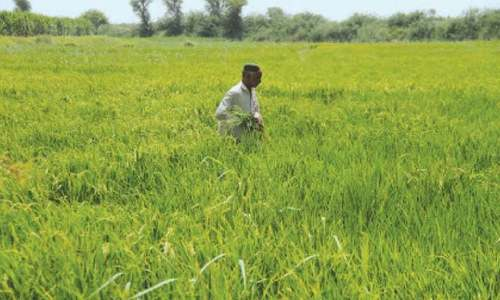 Kharif crop targets set amid irrigation water shortage