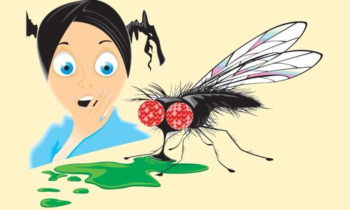 An interview with a housefly