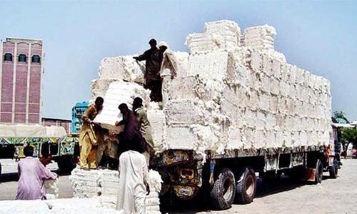 Cotton market slows down