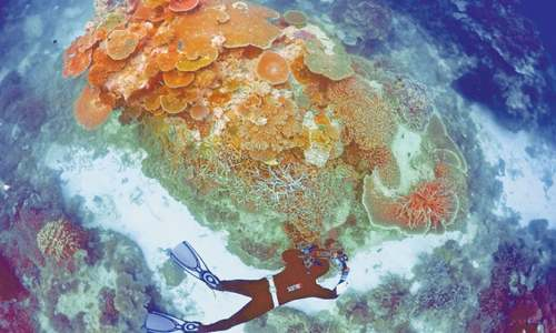 Australia to spend $400m on Great Barrier Reef