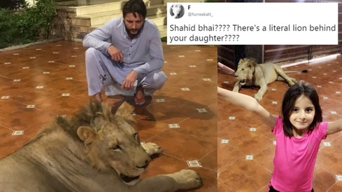 Shahid Afridi sparks social media outrage over photo of 'pet lion'