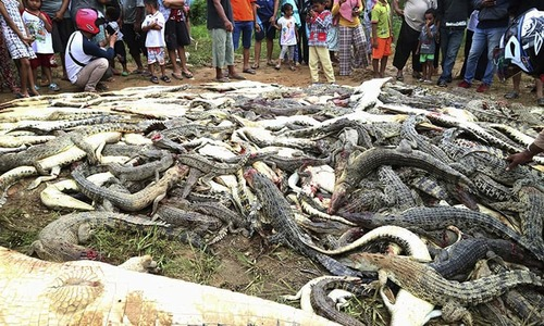Indonesian mob butchers hundreds of crocodiles in revenge attack