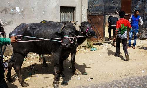 Mob lynches Muslim man over suspicion of cow smuggling in India