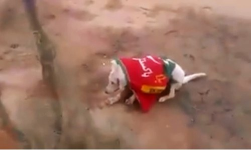 Dog wrapped in political party flag shot dead, captured on film