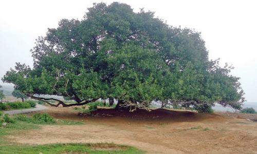 Horticulturists urge plantation of native trees this season