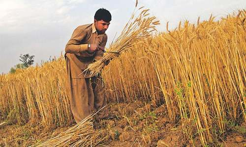 Agriculture credit rises by 38pc to Rs972bn