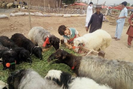 Dealers blame hike in animals' price on rupee devaluation