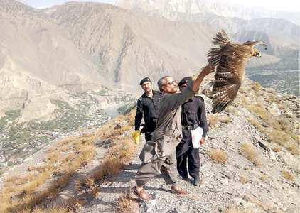 Eagle seized from villager released into national park