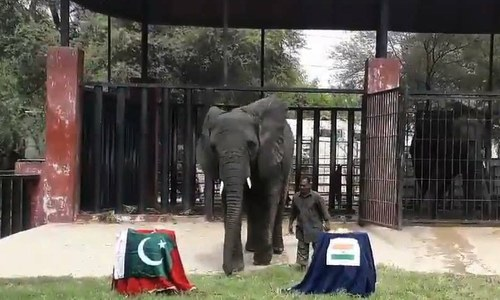 This Karachi elephant has predicted a winner for #PAKvsIND today. Who's yours?