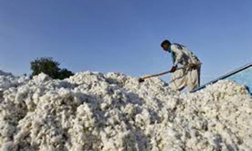 Cotton prices fall