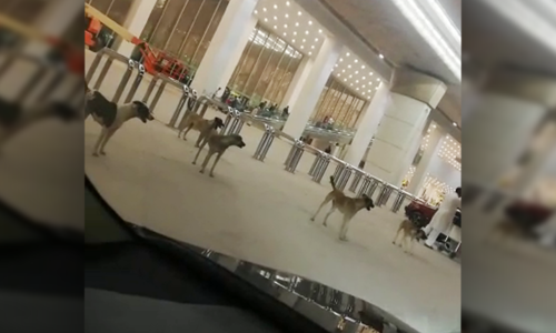Islamabad airport's manager sacked after stray dogs spotted wandering premises