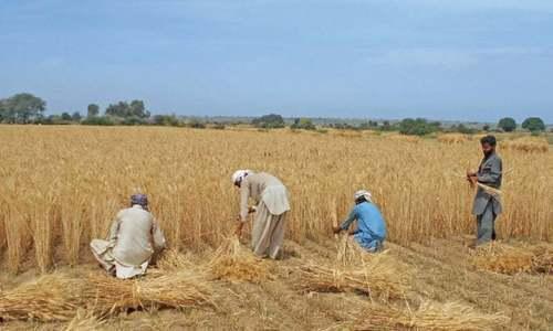 Rabi crops face 38pc water shortage, Irsa warns